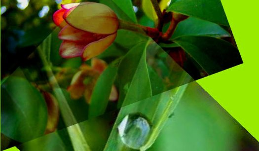 cropped-thev-dew-drop1.jpg