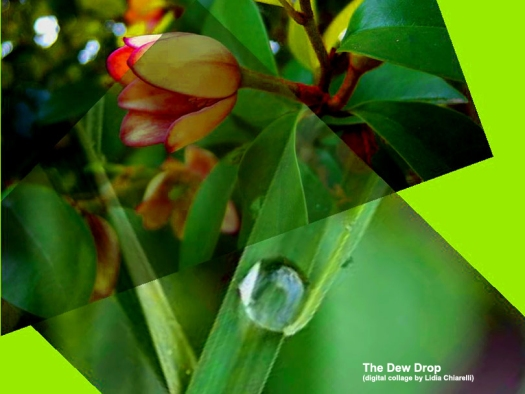 Thev Dew Drop-