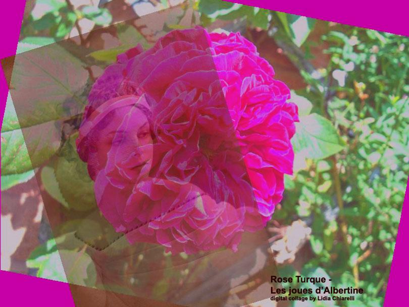 Rose-Turque---Les-joues-d'A